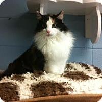 Adopt A Pet :: Mable (C17-007) - Lebanon, TN