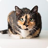 Adopt A Pet :: Callie - Hendersonville, NC
