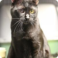 Adopt A Pet :: Loki - Yukon, OK