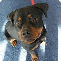 Adopt A Pet :: Tia **Adoption Pending** - Minneapolis, MN