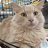 Adopt A Pet :: Joey - Modesto, CA