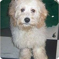 Adopt A Pet :: ELMO - Rossford, OH