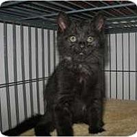 Adopt A Pet :: Panther - Shelton, WA