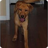 Adopt A Pet :: Key - Cumming, GA