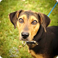 Adopt A Pet :: Autumn - RESCUED! - Zanesville, OH