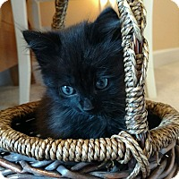 Adopt A Pet :: Watson - Monroe, NC