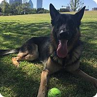 Adopt A Pet :: Zeus - Plano, TX