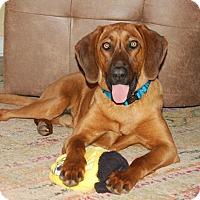Adopt A Pet :: Yukon - Huntsville, AL