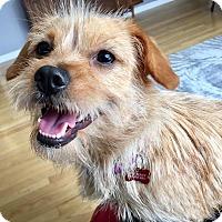 Adopt A Pet :: Merryweather - Troy, MI