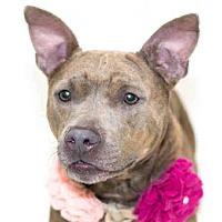 Adopt A Pet :: HAZEL - Orlando, FL