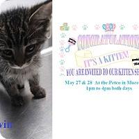 Adopt A Pet :: Darwin - Northfield, OH