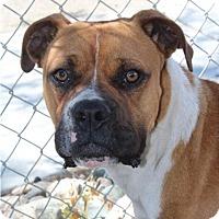 Adopt A Pet :: Butler - Red Bluff, CA