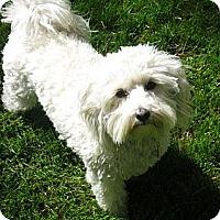 Adopt A Pet :: Poco - Denver, CO