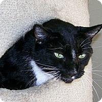 Adopt A Pet :: Cordelia(Cordy) - Scottsdale, AZ