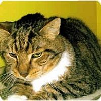 Adopt A Pet :: Cliff - Medway, MA