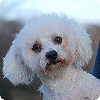 Adopt A Pet :: Romeo - Providence, RI