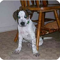 Adopt A Pet :: Onyx - Chandler, IN
