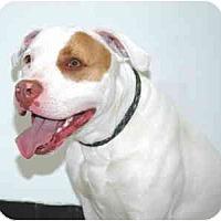 Adopt A Pet :: Merlin - Port Washington, NY