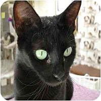 Adopt A Pet :: Harlow - Phoenix, AZ