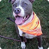Adopt A Pet :: Smokey - Crescent City, CA