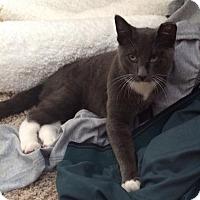 Adopt A Pet :: Beckett - Ogallala, NE
