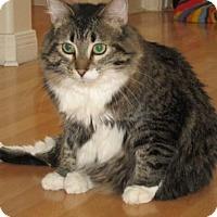 Adopt A Pet :: Miss Daisy - Prescott, AZ
