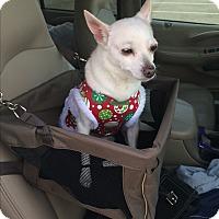 Adopt A Pet :: Lily - Corona, CA