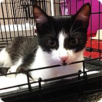 Adopt A Pet :: Crescent - N. Billerica, MA