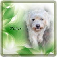 Adopt A Pet :: PAWS - Crowley, LA