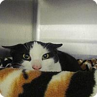 Adopt A Pet :: Monique - Grand Junction, CO