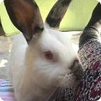 Adopt A Pet :: Tenzin - Woburn, MA