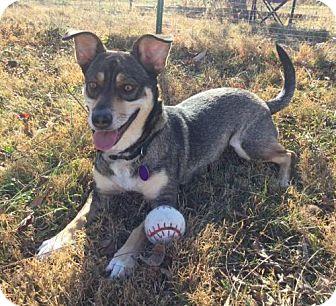 Corgi/Shepherd (Unknown Type) Mix Dog for adoption in Asheville, North Carolina - February