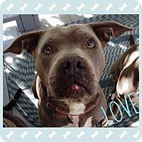 Adopt A Pet :: Willoe - Murrieta, CA
