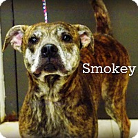 Adopt A Pet :: Smokey - Defiance, OH