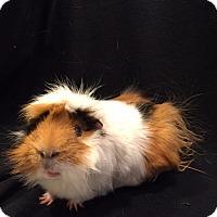 Adopt A Pet :: Ernest - Princeton, MN