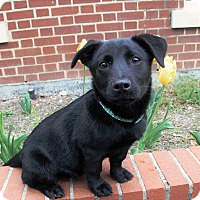 Adopt A Pet :: Victor pending adoption - Manchester, CT