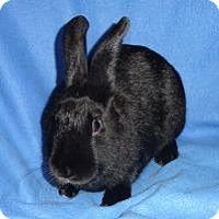 Adopt A Pet :: Bunnihana - Woburn, MA