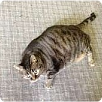 Adopt A Pet :: Toni - Warren, OH