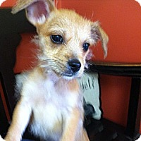 Adopt A Pet :: Elsa - Owensboro, KY