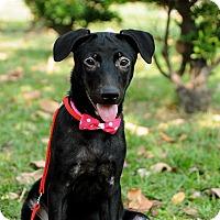 Adopt A Pet :: Alexa - Surrey, BC