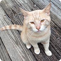 Adopt A Pet :: Travis - Monroe, GA