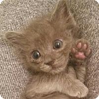 Adopt A Pet :: Eleanor - North Highlands, CA