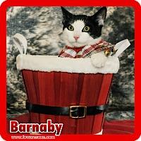 Adopt A Pet :: Barnaby - Wayne, NJ