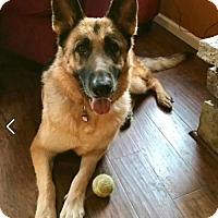 Adopt A Pet :: Ariel (adoption pending) - Kansas City, MO