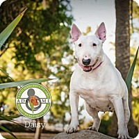 Adopt A Pet :: Daisy - Oceanside, CA