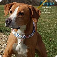 Adopt A Pet :: Fergus - Bucyrus, OH