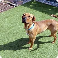 Adopt A Pet :: Hooch - Annapolis, MD