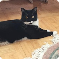 Adopt A Pet :: Tony - New York, NY