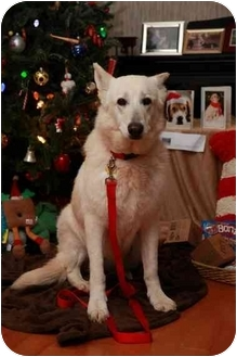 German Shepherd Dog Dog for adoption in Conyers, Georgia - Lisbeth