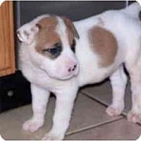 Adopt A Pet :: Ralpie - Cuddebackville, NY